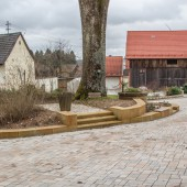 Neu gestaltet: Die Wurzeln der alten Esche in Muthmannsreuth mussten vor den Pflasterarbeiten freigelegt werden und im Unterbau mit einer wasserdurchlässigen Asphalttragschicht versehen werden. (Foto: Andreas Harbach)