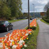 kd165 verver3 170x170 - Maschinelle Pflanzung von Blumenzwiebeln