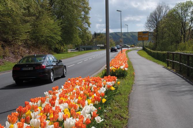kd165 verver3 - Maschinelle Pflanzung von Blumenzwiebeln