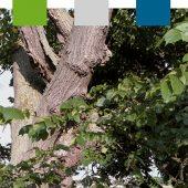kd186 leitsch 170x170 - Leitsch Baum-Akademie veröffentlicht Seminarprogramm 2019
