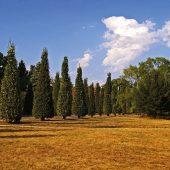 EMIKO setzt auf Mikroorganismen als wirksames Mittel gegen Trockenstresssymptome in Gärten und auf kommunalen Flächen (Foto: Kerstin Riemer auf Pixabay)