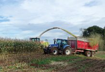 Mais wird gehäckselt und siliert (Foto: Lilou auf Pixabay)
